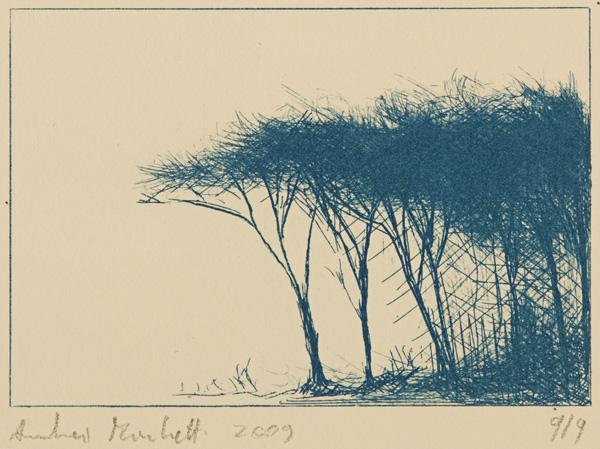 """boscaglia: cianotipia su Alcantara; foglio 25x35 lastra 9,5x14. Punta, carta vetrata"""" href=""""/public/boscaglia.jpg"""" rel=""""lightbox[roadtrip]"""">"""